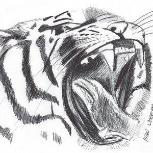 tigre_311139.jpg