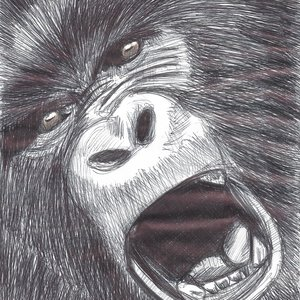 gorilla_311289.jpg