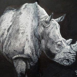 Rinoceronte_blanco_311896.jpg