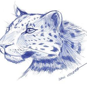 leopardo_312453.jpg