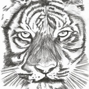 tiger_312455.jpg