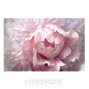 rose_342751.jpg