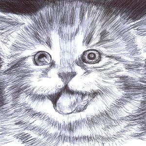 cat05_354834.jpg
