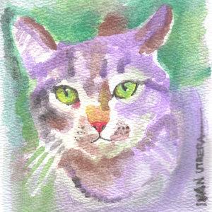 cat06_355051.jpg
