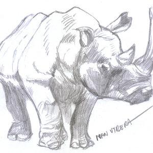 rinoceronte04_355059.jpg