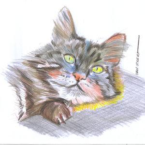 cat08_355289.jpg