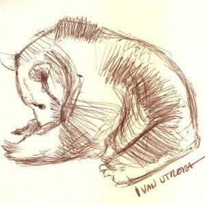 bear_344789.jpg
