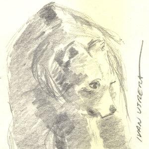 bear02_344909.jpg