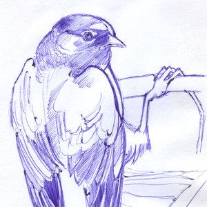 bird_345139.jpg