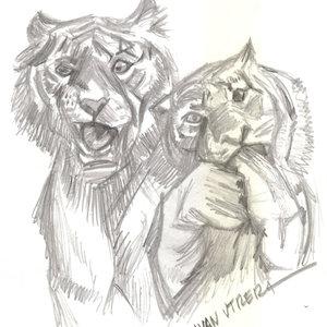 tigers01_345129.jpg
