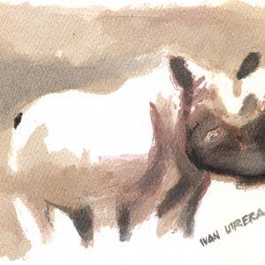 rinoceronte02_363273.jpg