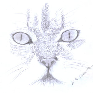 cat14_363809.jpg