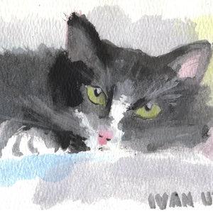 cat15_363967.jpg