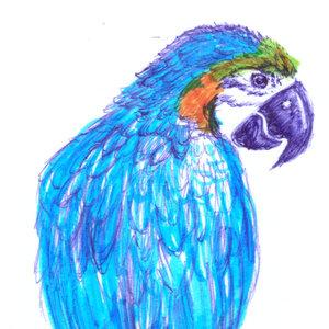 parrot_363966.jpg