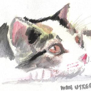 cat16_364073.jpg