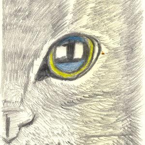 cat17_364149.jpg
