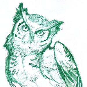 owl05_364148.jpg