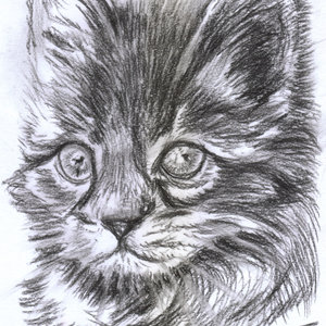 cat18_364215.jpg