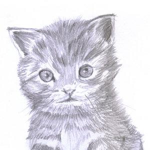 cat19_364493.jpg