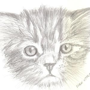 cat20_364593.jpg