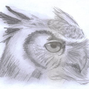 owl03_364592.jpg