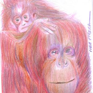 orangutan01_364655.jpg