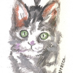 cat22_364775.jpg