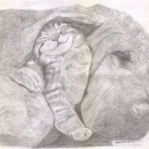 cat23_364821.jpg
