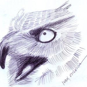 owl01_364827.jpg