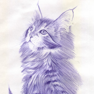 cat24_365155.jpg