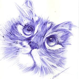 cat25_365284.jpg