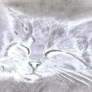 cat26_365376.jpg
