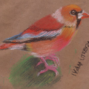 bird01_345605.jpg