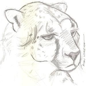cheetah_366138.jpg