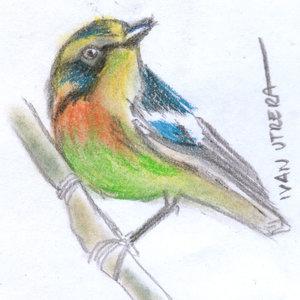bird02_345681.jpg