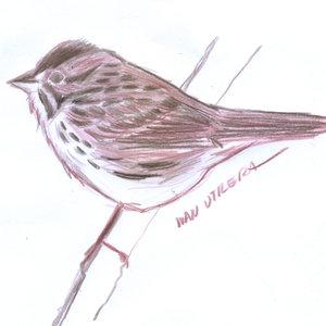 bird06_345712.jpg