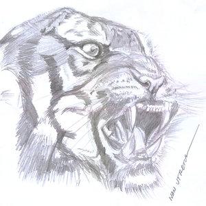 tiger12_345682.jpg