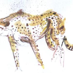cheetah01_366727.jpg