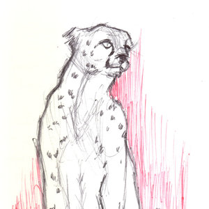 cheetah02_366849.jpg