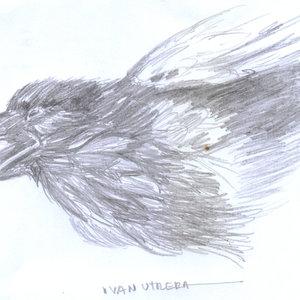 crow_367580.jpg