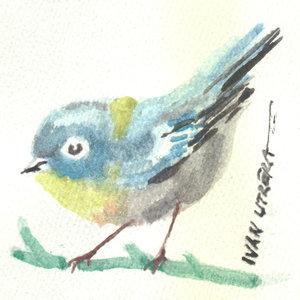 bird07_345868.jpg