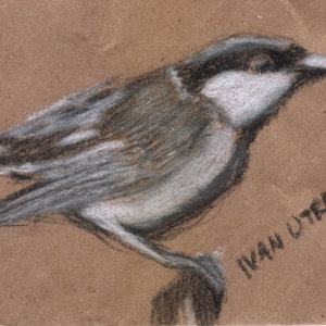bird08_345889.jpg