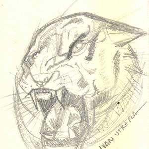 tiger11_345869.jpg