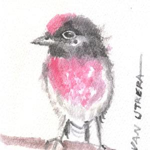 bird10_345948.jpg