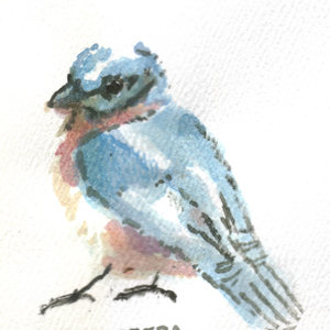 bird11_345968.jpg