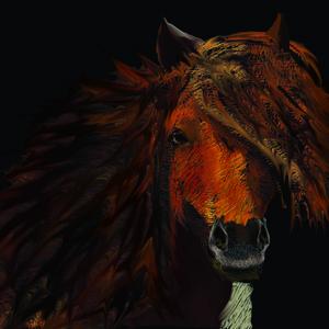 caballo_369911.jpg