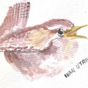 bird12_346040.jpg