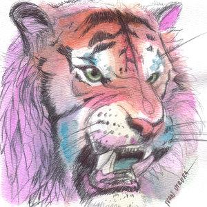 tiger08_346041.jpg