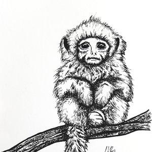 Little_Monkey_370809.jpg