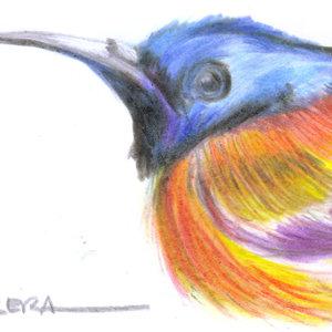 bird14_346266.jpg